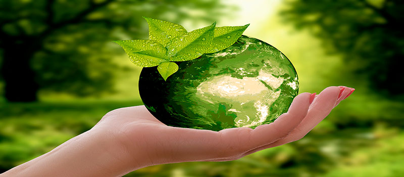 dia-mundial-educacion-ambiental